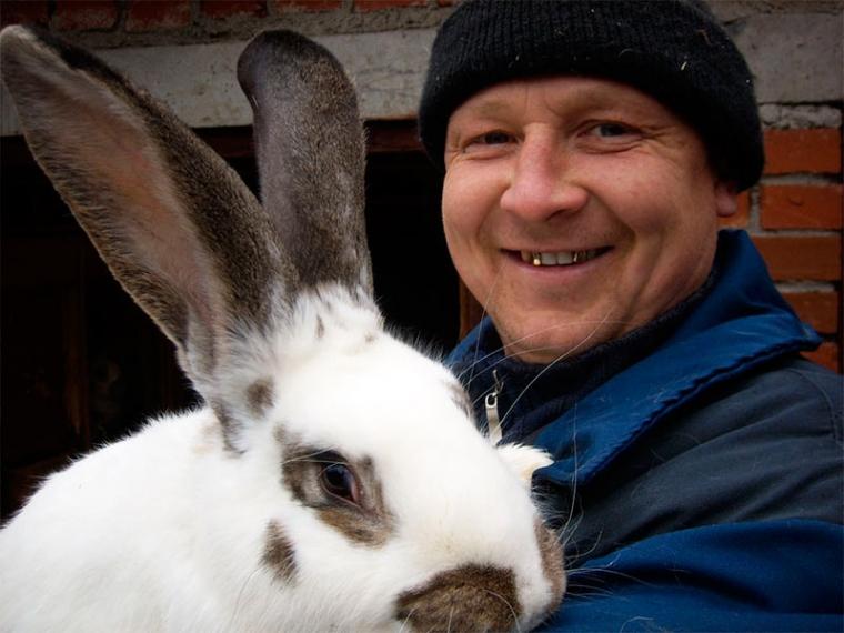 самые большие в мире кролики фото