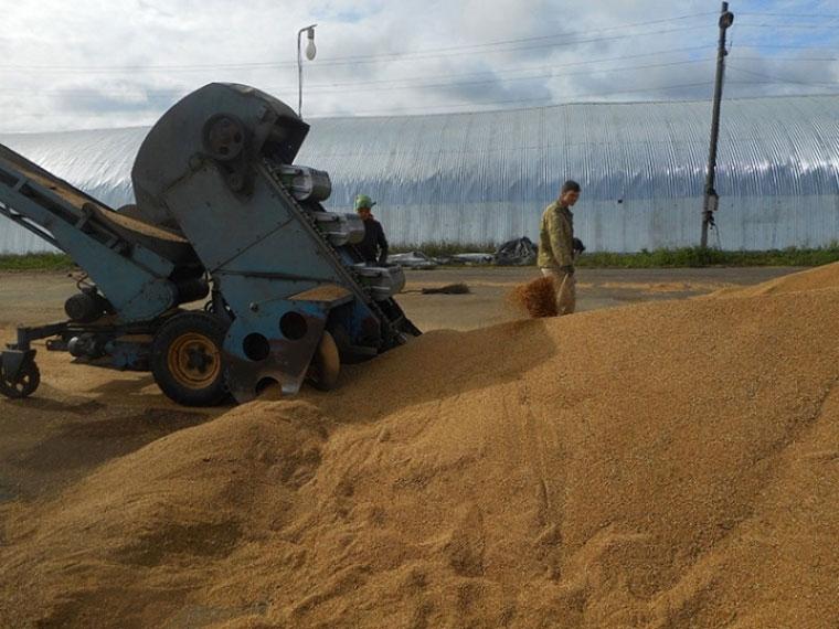 Врегионе завершена уборка зерновых культур