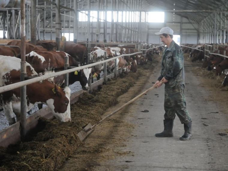 Потребность Омской области вкадрах превосходит 70 тыс. человек