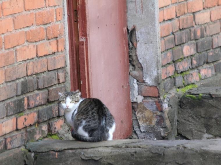 Мэрию Омска вынудили вкратчайший срок расселить граждан аварийного дома