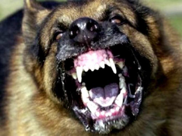 Стая бродячих собак нападает настудентов омского колледжа