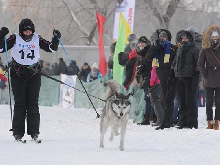 Гонка ездовых собак «Гиперборея» пройдет вКрутой Горке