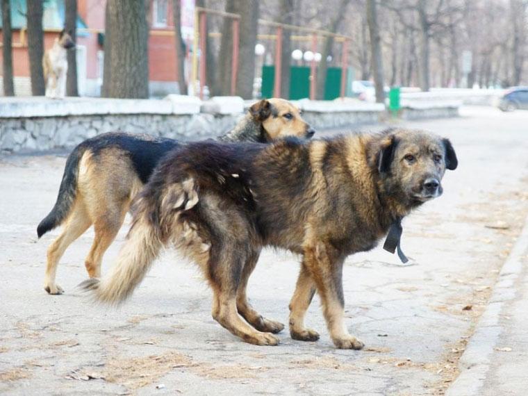 Животные покусали неменее 3 тыс. граждан Бурятии