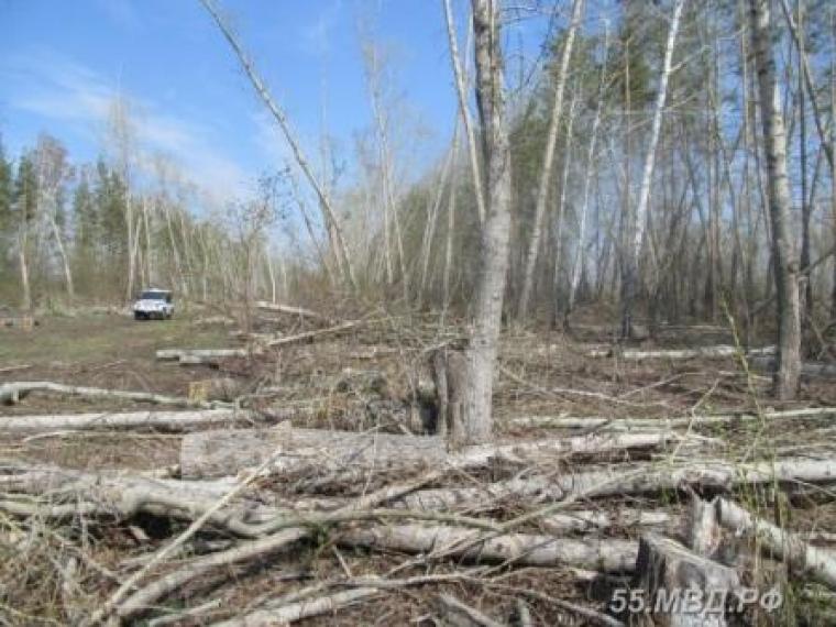 ВОмской области нелегально вырубили 458 тополей