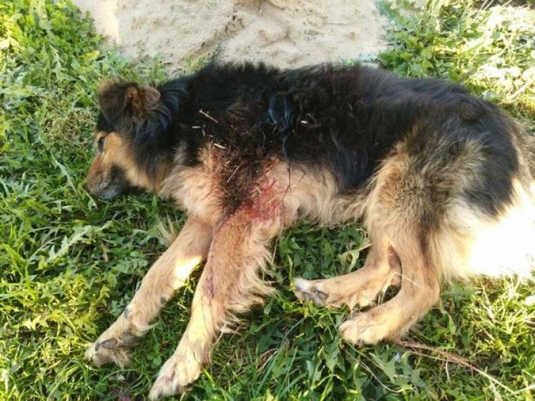 Омич убил собаку трубой наглазах уподростка