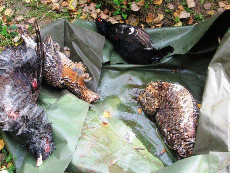 Насевере Омской области охотятся заохотниками наглухаря