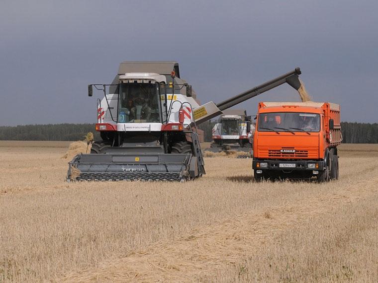 Омские аграрии собрали неменее 3 млн тонн зерна