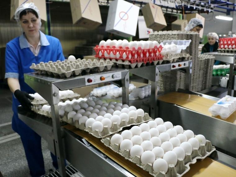 ВТамбовской области выросло производство мяса, молока ияиц