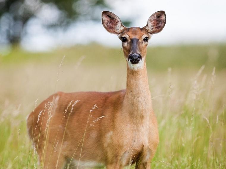 В Омской области стало меньше браконьеров