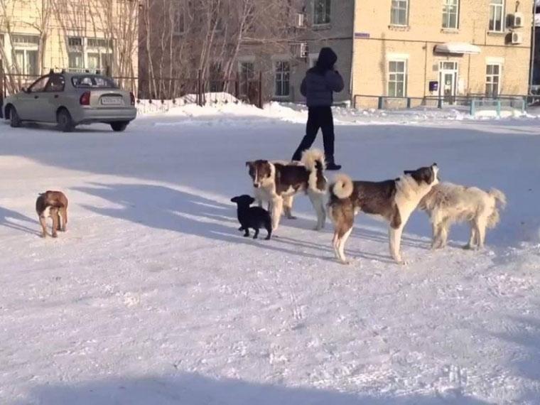 ВОмске парк оплатил 120 тыс. руб. занападение собаки наребенка
