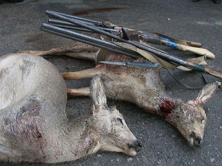 В Омской области браконьер заплатит штраф и отдаст ружье