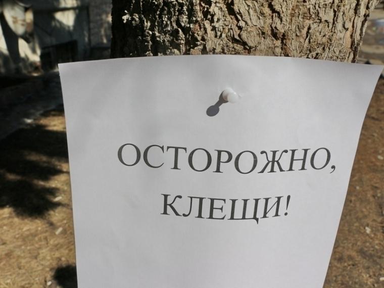 В Омской области после укусов клещей госпитализировали шесть человек