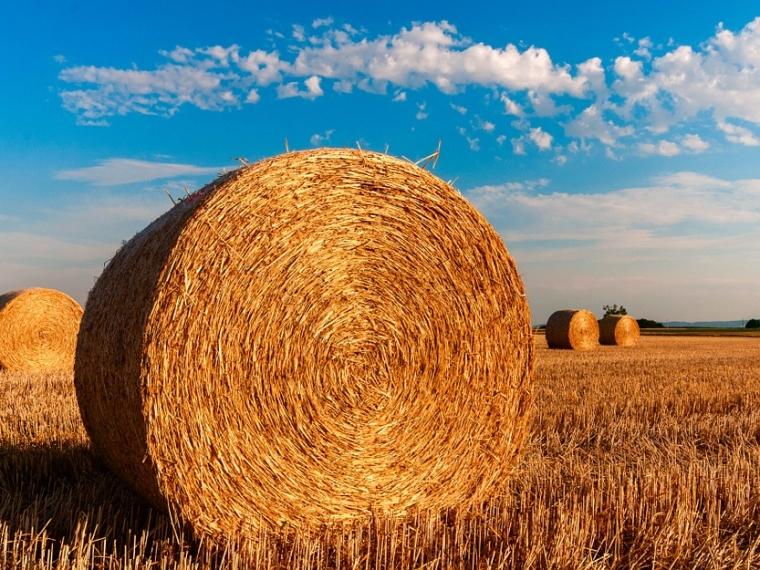 Омские сельхозпроизводители смогут поставлять солому и фураж в Японию #Экономика #Омск