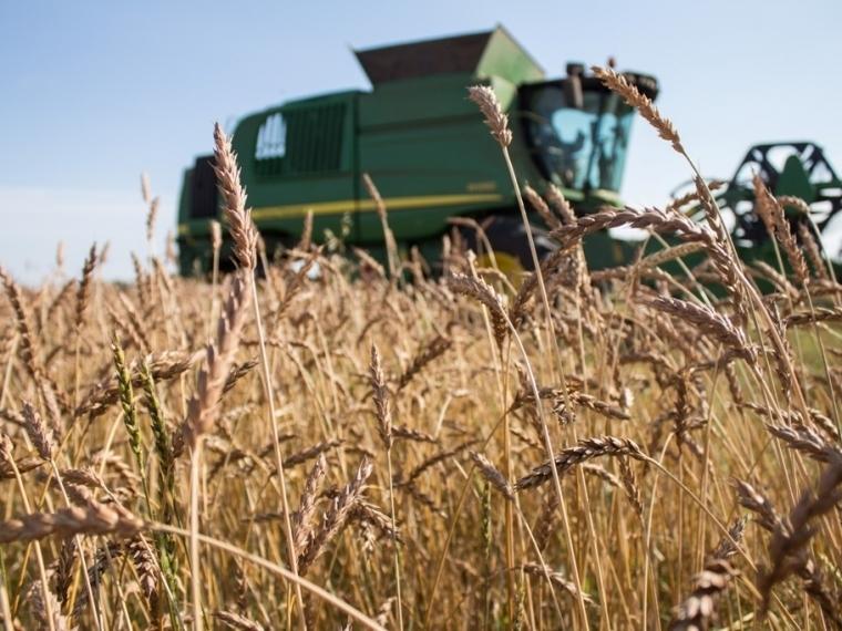 Бурков: зерновой консорциум объединит сибирских аграриев #Экономика #Омск