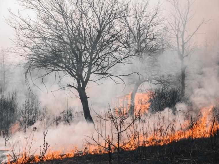 Борьба с лесными пожарами теперь под контролем президента